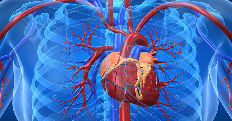 Top Foods and Herbs to improve Blood Circulation